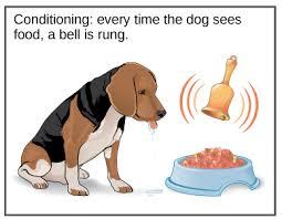 What Is A Reflex Action Example Innate Behaviors Article Animal Behavior Khan Academy