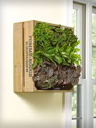 Indoor Wall Herb Garden 129 Best Modern Planters Images On Pinterest Modern Planters