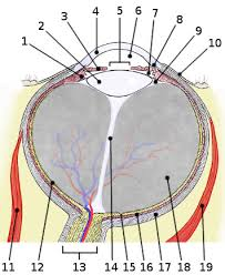 Anatomy Of The Eye Free Anatomy Quiz Anatomy Of The Eye Quiz 3