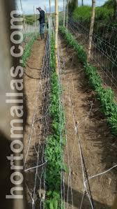 crop support net a better alternative to raffia