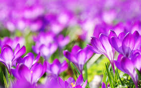 Images Flowers Flowers Wallpapers Flowers Wallpapers Flowers Awesome Photos