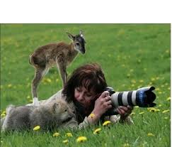 a photographer is approached by a baby deer and baby wolf while