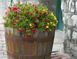 Half Barrel Planters by Unique And Decorative Barrel Planters Wearefound Home Design