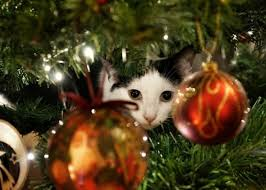 10 tips to cat proof your tree