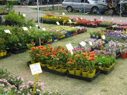 native pot plants where to buy plants and pots on the sunshine coast sunshine coast