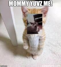 Cute Cat Memes - cute cat meme imgflip