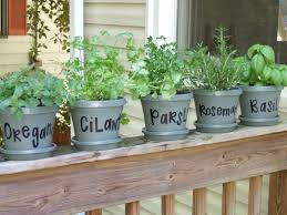 Fragrant Plants For Indoors Thyme For Herbs Carolina Charm