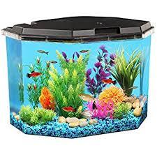 Aqueon Led Light Amazon Com Aqueon Led Minibow Aquarium Starter Kit With Led