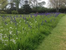 best 25 meadow garden ideas on pinterest small cottage garden