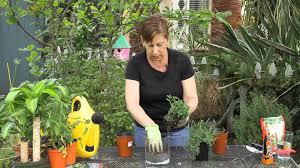 how to home herb garden in a glass terrarium garden space youtube