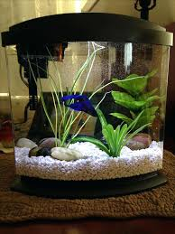 Betta Fish Bowl Decorations Fish Bowl Betta Fish Tank Decorations