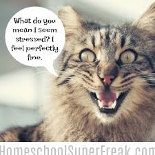 Stressed Out Memes - funny homeschool memes stressed out moms homeschool super freak
