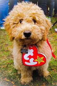 Dog Halloween Costumes Girls Dogs Halloween Costumes 48 Funny Dog Halloween Costumes Cute