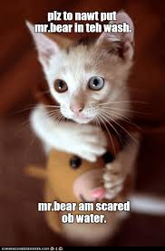 Memes Scared - scared ob water lolcats lol cat memes funny cats funny cat