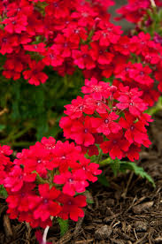 plant heat loving flowers there are many colorful flowers that