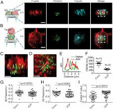 imaging of cell u2013cell communication in a vertical orientation