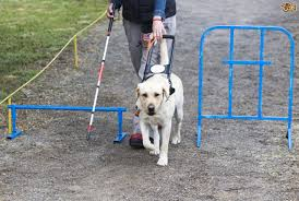how do partially sighted people clean up after their guide dogs