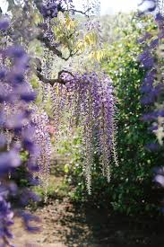 ashikaga flower park someform