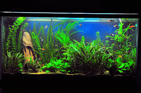the preferred tank levels for community fish species