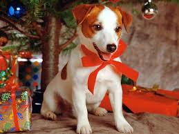 funny christmas dogs animals amazing latest pictures funny and