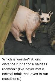 Racoon Meme - 25 best memes about hairless raccoon hairless raccoon memes