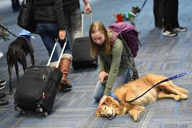 Washington traveling with pets images If you 39 re stressed about flying these four legged therapists can jpg