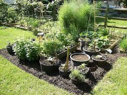 78 best container gardening images on pinterest container