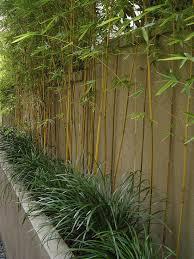 bambus fã r den balkon garden design retaining wall bamboo trees garden