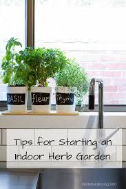 starting indoor herb garden zandalus net