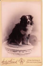 2 g rose australian shepherds circus the cabinet card gallery