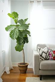 interior inspiring interior potted plant design ideas with