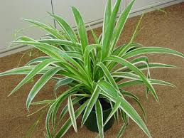 plantes dépolluantes chambre à coucher les plantes dépolluantes purifiez l air de votre appartement