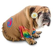 Halloween Costumes English Bulldogs Halloween Costumes Pups