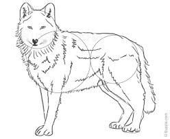 step by step instructions for beginners to draw a wolf wolf and