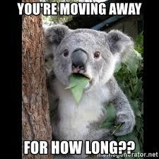 Moving Away Meme - you re moving away for how long koala can t believe it meme