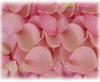 Real Rose Petals Fresh Rose Petals Where To Buy Real Rose Petals Flower Explosion