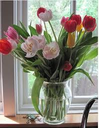 Nice Flower Vases The 25 Best Tulips In Vase Ideas On Pinterest Growing Tulips