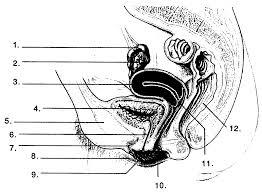 ididit wiring diagrams wiring diagram schematics