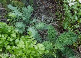 best mulch for vegetable garden 2017 a gardener u0027s guide to