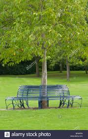 circular bench around a tree stock photo royalty free image