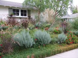 california native plant landscape design examples drought resistant landscaping ideas thediapercake home trend