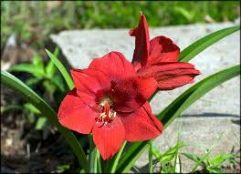 general bulb care articles gardening know how