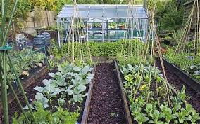 Garden Allotment Ideas How To Keep Your Vegetable Patch Going Strong Through The Winter