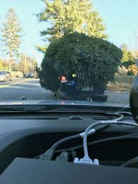 police stop car carrying massive christmas tree home people com