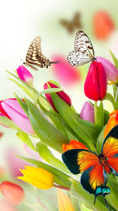 butterfly flower wallpaper butterfly flowers tulips 4k nature 14993