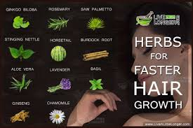 How To Make Your Hair Grow Faster 10 Amazing Herbs To Make Your Hair Grow Faster
