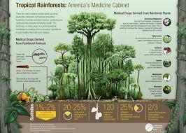 Tropical Plant Diseases - tropical rainforest natural resource medicine