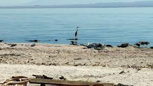 salton sea restoration no longer waiting for dust to settle