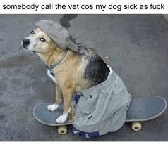 Dog At Vet Meme - 25 best memes about my dog my dog memes