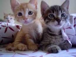 beautiful kittens xtremely cute beautiful kittens youtube